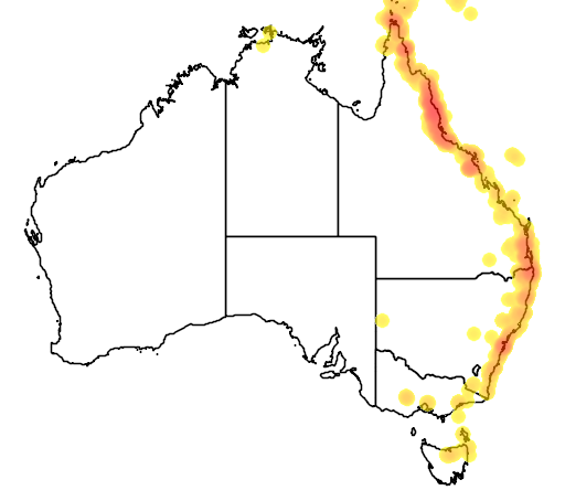 distribution map showing range of Ptilinopus superbus in Australia