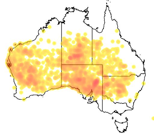 distribution map showing range of Ptilotus obovatus in Australia