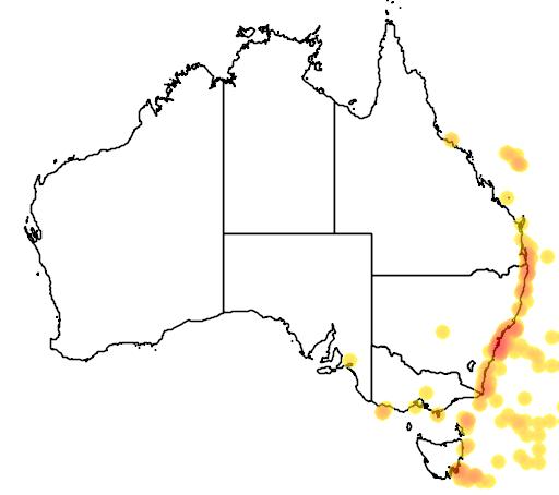 distribution map showing range of Puffinus bulleri in Australia