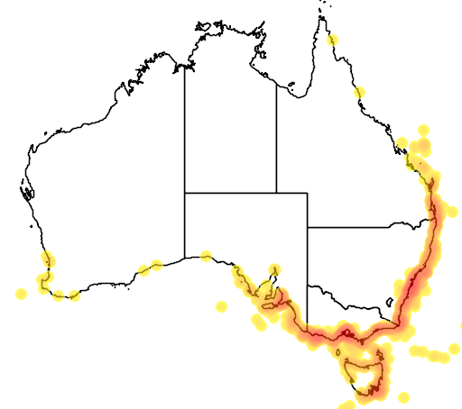 distribution map showing range of Puffinus gavia in Australia