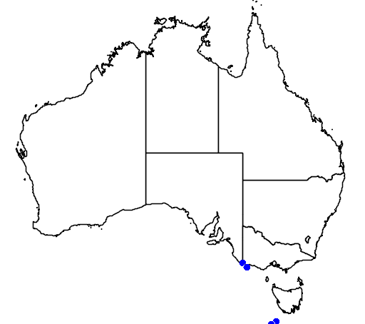 distribution map showing range of Puffinus gravis in Australia