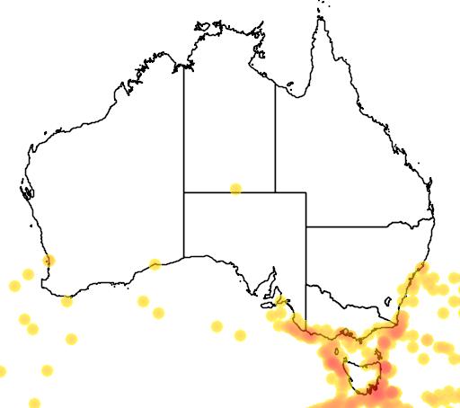 distribution map showing range of Puffinus griseus in Australia