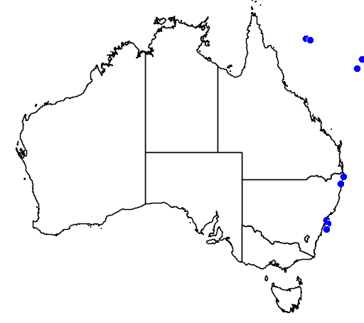 distribution map showing range of Puffinus lherminieri in Australia