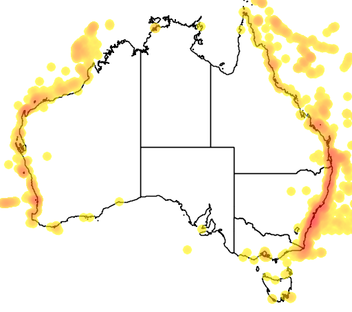 distribution map showing range of Puffinus pacificus in Australia