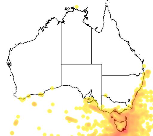 distribution map showing range of Puffinus tenuirostris in Australia