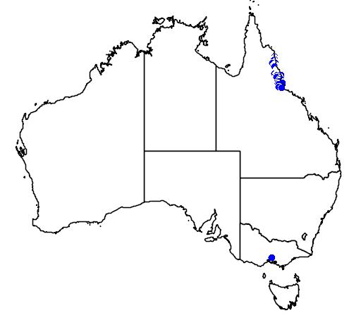 distribution map showing range of Pullea stutzeri in Australia