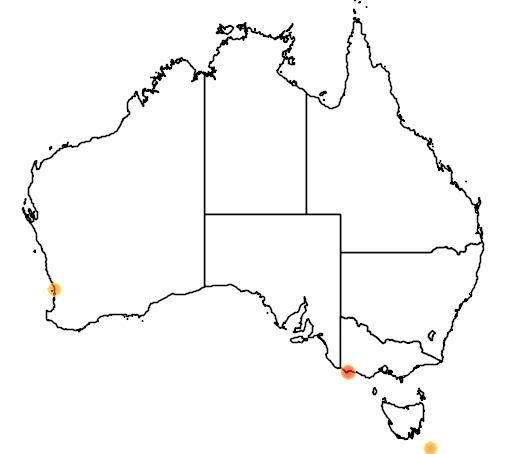distribution map showing range of Pygoscelis adeliae in Australia