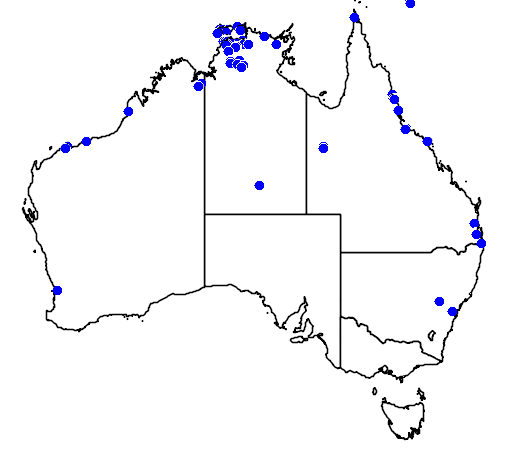 distribution map showing range of Ramphotyphlops braminus in Australia