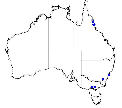 distribution map showing range of Rhododendron lochiae in Australia