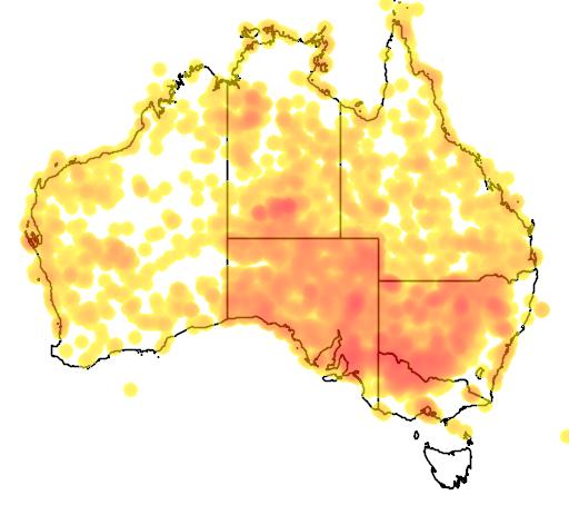 distribution map showing range of Salsola australis in Australia
