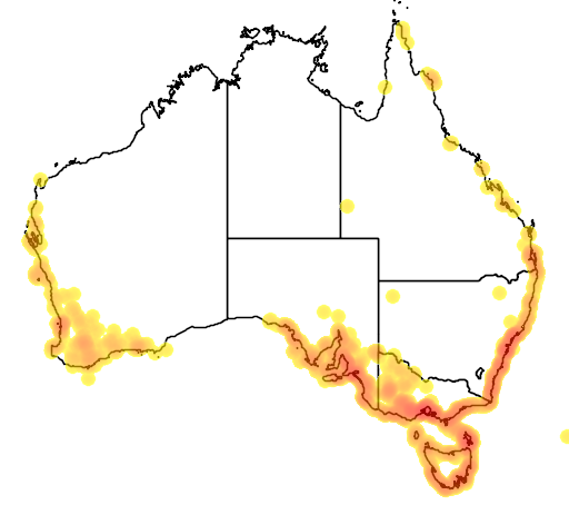 distribution map showing range of Sarcocornia quinqueflora in Australia