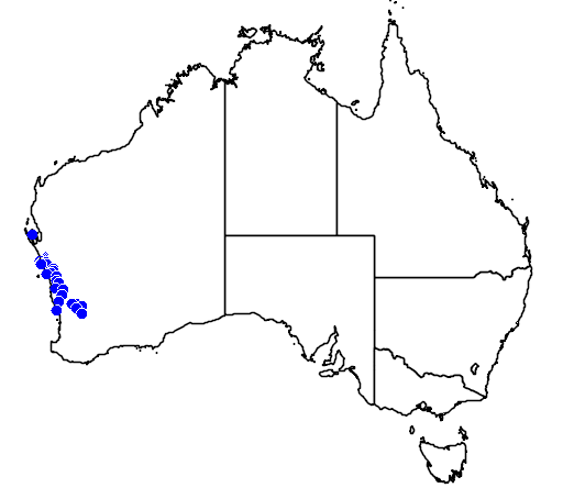 distribution map showing range of Scholtzia oligandra in Australia