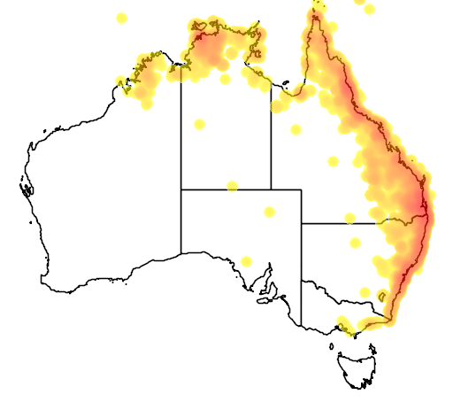distribution map showing range of Sphecotheres vieilloti in Australia