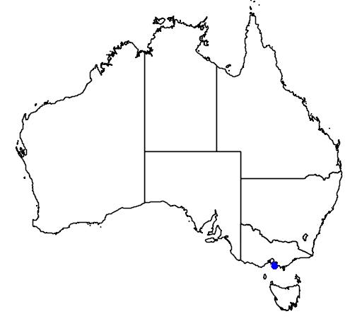 distribution map showing range of Spheniscus magellanicus in Australia