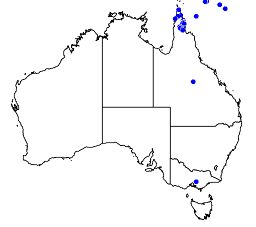 distribution map showing range of Spilocuscus maculatus in Australia