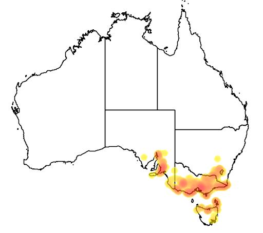 distribution map showing range of Spyridium parvifolium in Australia