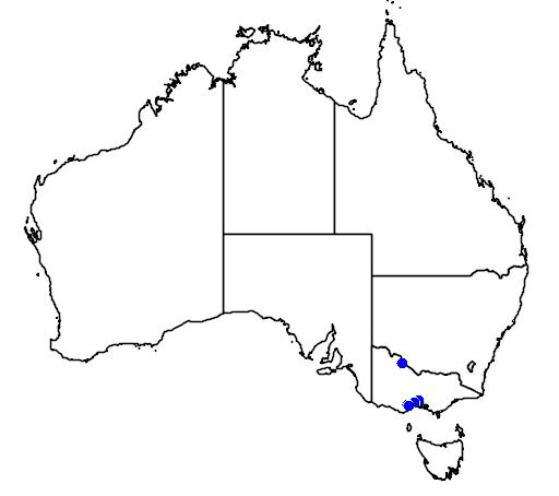 distribution map showing range of Steganopus tricolor in Australia