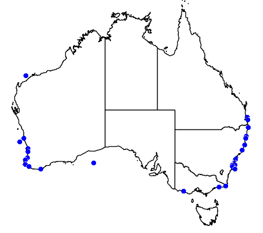 distribution map showing range of Stenella coeruleoalba in Australia