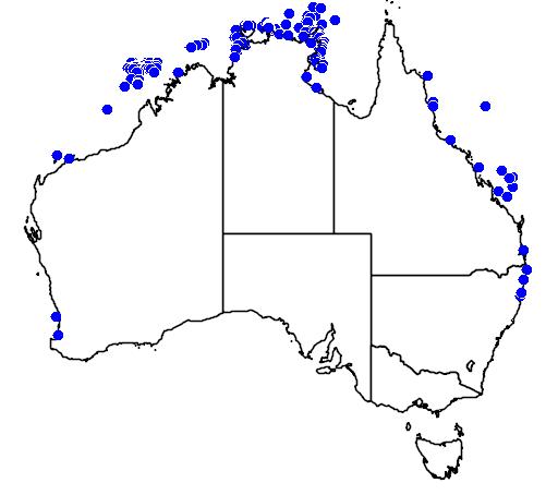 distribution map showing range of Stenella longirostris in Australia