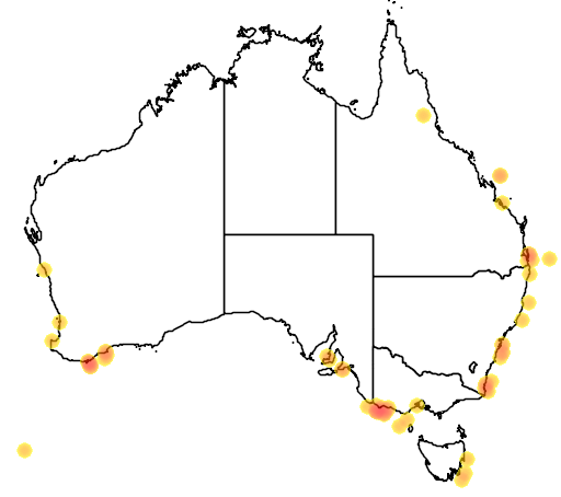 distribution map showing range of Stercorarius maccormicki in Australia