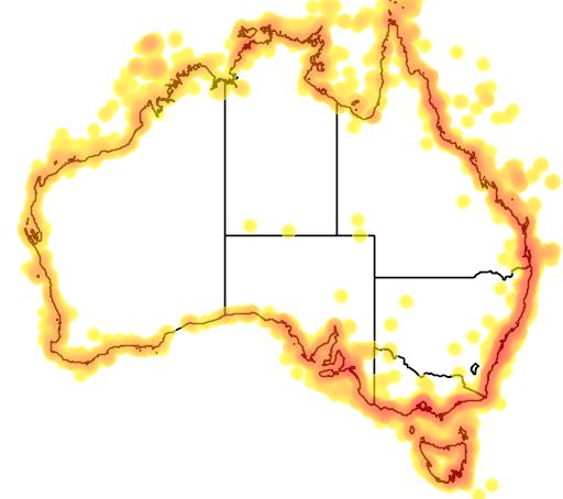 distribution map showing range of Sterna bergii in Australia