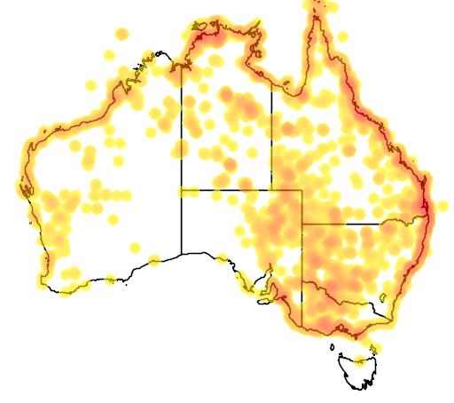 distribution map showing range of Sterna nilotica in Australia