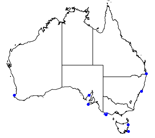 distribution map showing range of Sterna vittata in Australia
