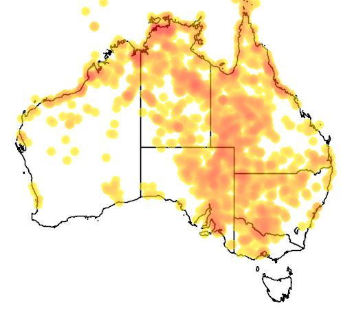 distribution map showing range of Stiltia isabella in Australia