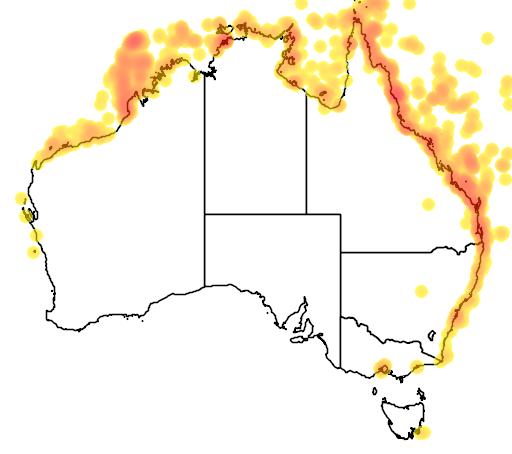 distribution map showing range of Sula leucogaster in Australia