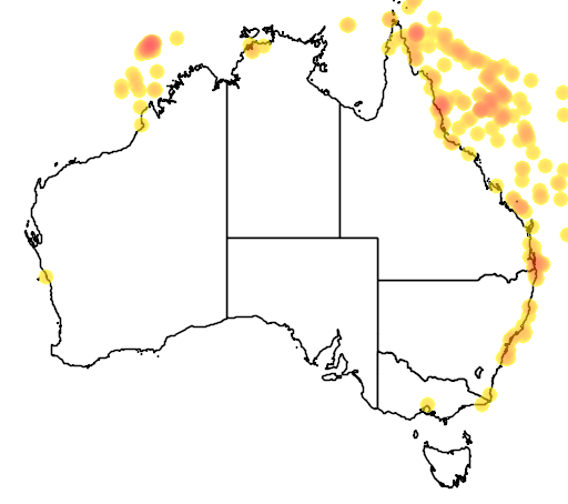 distribution map showing range of Sula sula in Australia