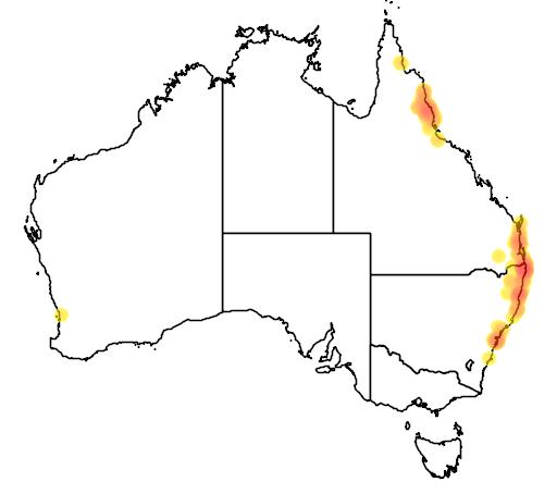 distribution map showing range of Syzygium luehmannii in Australia