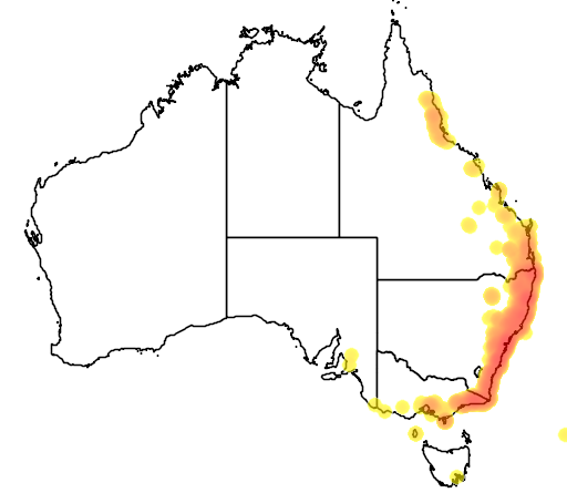 distribution map showing range of Syzygium smithii in Australia