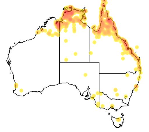 distribution map showing range of Tadorna radjah in Australia