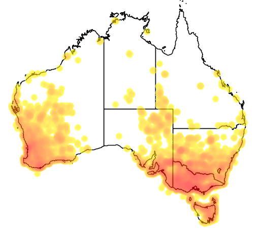 distribution map showing range of Tadorna tadornoides in Australia