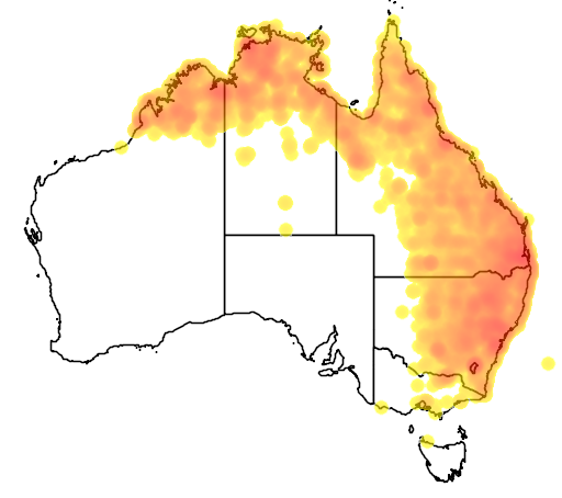 distribution map showing range of Taeniopygia bichenovii in Australia