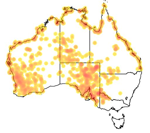 distribution map showing range of Tecticornia indica in Australia