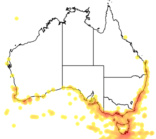 distribution map showing range of Thalassarche cauta in Australia