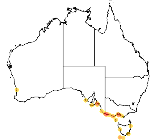 distribution map showing range of Thalassoica antarctica in Australia