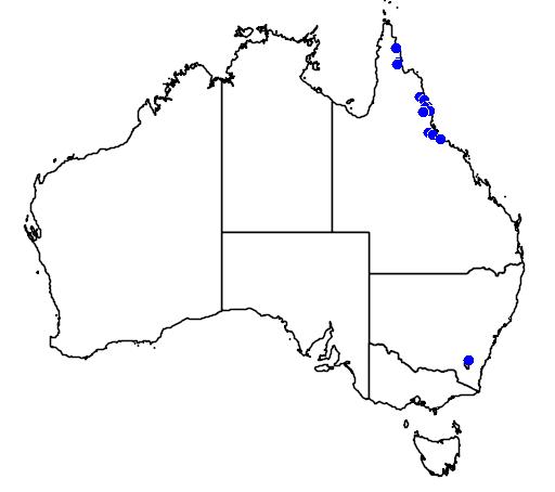 distribution map showing range of Thelychiton jonesii in Australia