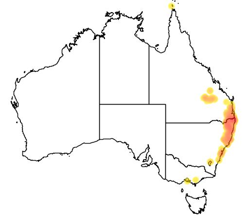 distribution map showing range of Thelychiton kingianus in Australia