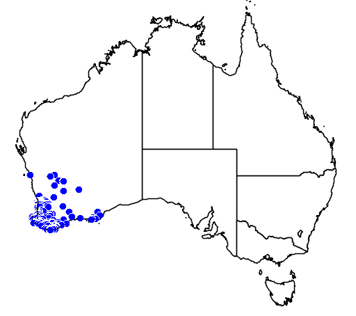 distribution map showing range of Thelymitra macrophylla in Australia