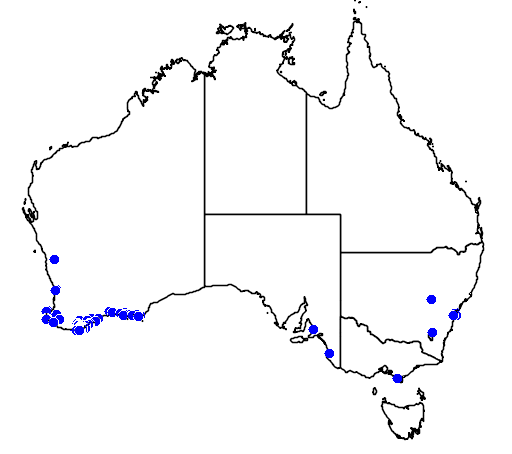 distribution map showing range of Thryptomene saxicola in Australia