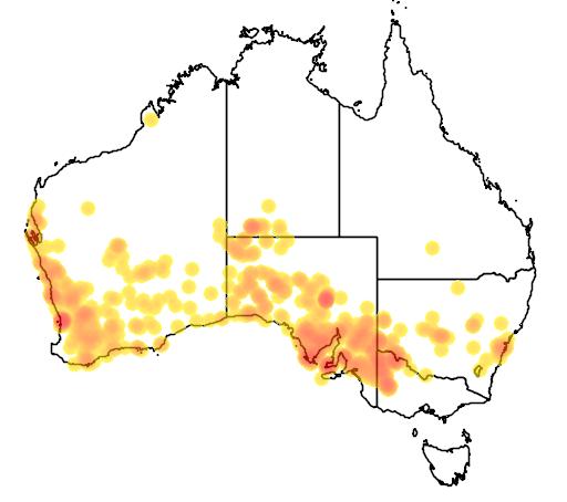 distribution map showing range of Tiliqua occipitalis in Australia