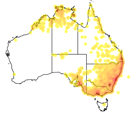 distribution map showing range of Tiliqua scincoides in Australia