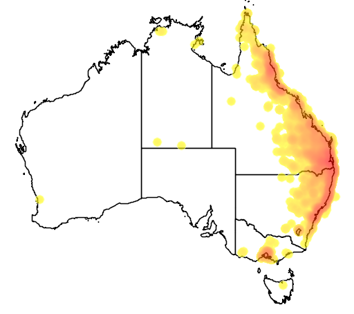 distribution map showing range of Trichoglossus chlorolepidotus in Australia