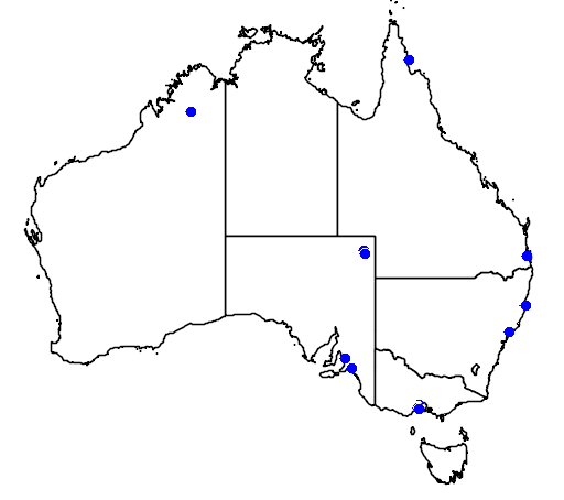 distribution map showing range of Tringa flavipes in Australia