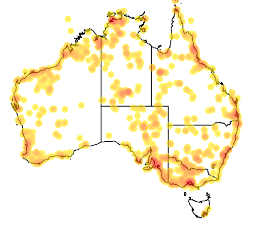 distribution map showing range of Tringa glareola in Australia