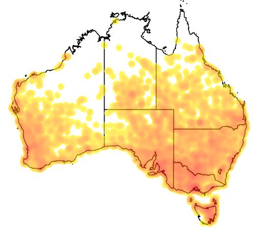 distribution map showing range of Vanellus tricolor in Australia
