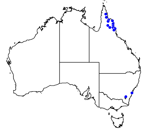 distribution map showing range of Vappodes phalaenopsis in Australia