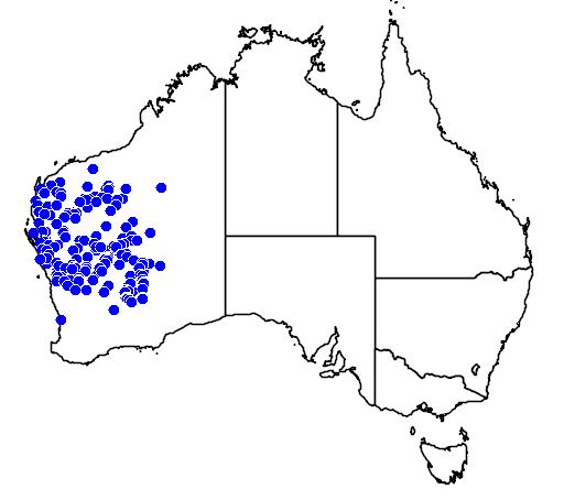 distribution map showing range of Varanus caudolineatus in Australia